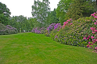 rhodedendrons 2